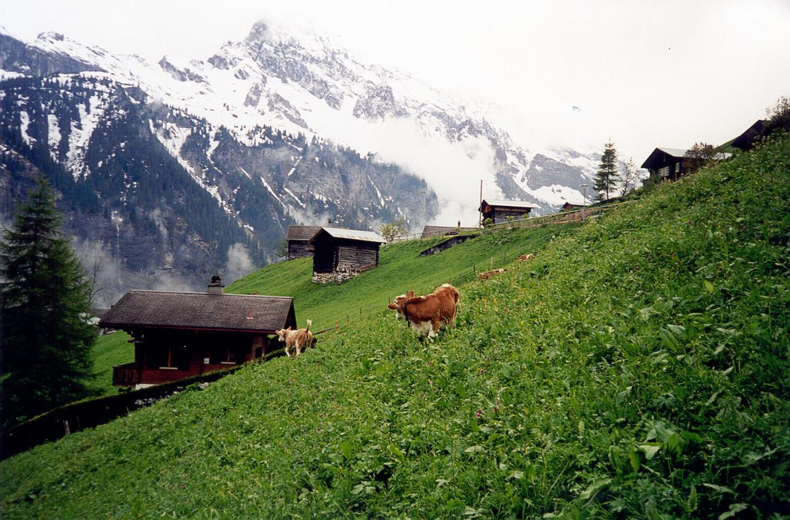 Switzerland Countryside
